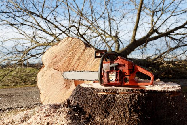 A councillor has called for two trees to be planted for every tree that is felled. Photo: Pixabay