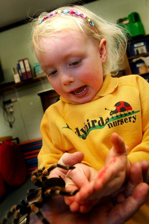 Lucy Sanderson, 4, up close with Tarantula