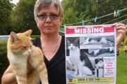 Pet detectives on the trail of missing 'Smudge', a cat from Chiswell Green