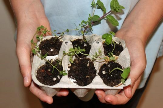 St Albans & Harpenden Review: Plant A Mini Herb Garden